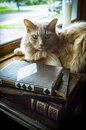 Old Books Cat Royalty Free Stock Photo