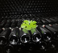 Old bottles of red wine dark cellar with Royalty Free Stock Photo