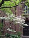 Old brick church with foliage Royalty Free Stock Photo