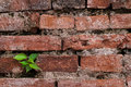 Old brick and plants wall background Royalty Free Stock Photo