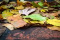 Old brick steps with autumn leaves Royalty Free Stock Photo
