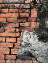 Old brick wall back ground with a small plant on it Royalty Free Stock Photo