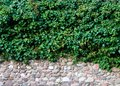 Old brick wall covered with plants