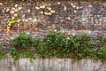 Old brick wall covered with yellow ivy and green plants Royalty Free Stock Photo