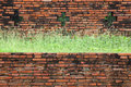 Old brick wall grown with grass Stock Photos