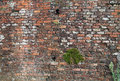 Old brick wall an image Stock Photos
