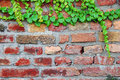 Old brick wall with ivy Stock Photos