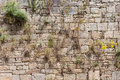 Old brick wall ivy wallflowers Stock Photo