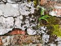 Old Bricks With Green Moss And...