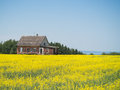 Old broken down house and yellow field an abandoned home in a of with green trees blue sky mountains in distance Stock Image