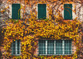 Old building with yellowed ivy and green windows Royalty Free Stock Photography