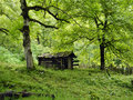 The old cabin in the woods wood forest grass green moss summer tree chestnut abandoned deserted neglected desolate forlorn Stock Photo