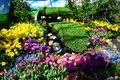 Old car in flower show. Royalty Free Stock Photo