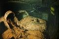 Old Car inside II world war ship wreck hold Royalty Free Stock Photo