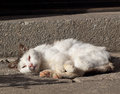 Old cat in the sun basking at house Stock Photos