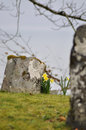 Gravestone with daffodils Royalty Free Stock Photo