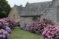 Old Church with window and Hydrangea plant Royalty Free Stock Photo