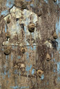 Old climbing wall grunge texture Royalty Free Stock Photography