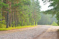 Old cobblestone road in pine forest at summer. Royalty Free Stock Photo