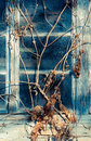 Old colorful window with branch at the ranch Royalty Free Stock Photography