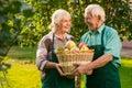 Old couple holding apple basket. Royalty Free Stock Photo