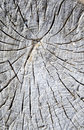 Old cracked stump on the beach Royalty Free Stock Photo