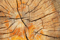 Old cracked tree trunk cut texture Stock Photos