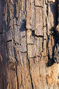 Old cracked wood photographed close up of wooden surface seen a lot of faults small depth of field Royalty Free Stock Photo