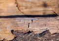 Old cracked wood photographed close up of wooden surface seen a lot of faults small depth of field Stock Photo