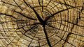 Old crosscut log a weathered shows great detail of tree rings Royalty Free Stock Image