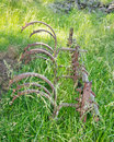 Old cultivator buried in grass an lies on a farm Royalty Free Stock Image