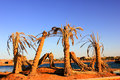 Old dead Palm Trees Royalty Free Stock Photo