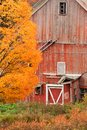 Old dilapidated country barn during autumn falling down fall foliage season in stowe vermont usa Stock Photography