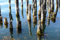 Old Dock Pilings in calm ocean waters Stock Photos