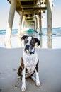 Vecchio cane volendo a giocare su vacanza