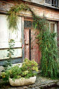 Old door on antique town shop in france very wood with overgrown vegetation an and abandoned Royalty Free Stock Photo