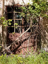 Old door iron with shrubs italy Royalty Free Stock Photography