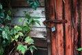 Old door locked with padlock green leaves of wild vine around walls Stock Image