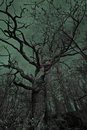 Old eerie tree a big in a dark and spooky setting Royalty Free Stock Photos