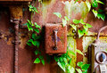 Old electrical panel on iron wall and leaves of ivy Royalty Free Stock Photo
