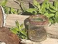 Old empty jar with