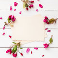 Old empty photo for the inside and frame of apple flowers Royalty Free Stock Photo
