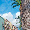 Old facades bosa riverfront with palm trees Royalty Free Stock Photos
