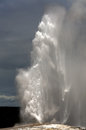 Old faithful geyser erupting yellowstone national park wyoming united states america Royalty Free Stock Photos