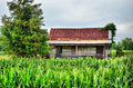 Old farm house sitting in corn field ruins of family the middle of a Royalty Free Stock Photography