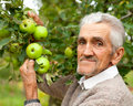 Old farmer and apple tree Stock Images