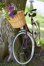 Old fashioned bicycle leaning against tree outdoors with flowers in basket Stock Photography
