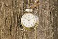 Old fashioned clock hanged on a tree Royalty Free Stock Photo