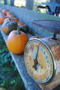 Old fashioned scale and pumpkins an rusty sits with at a farm stand Stock Photos