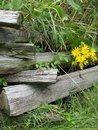 Old Fence and Yellow Flowers Royalty Free Stock Photo